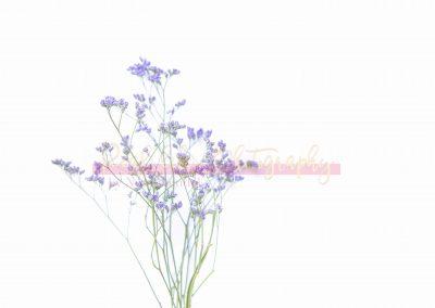 Creative Life - Minimal Flowers SAMPLE-1
