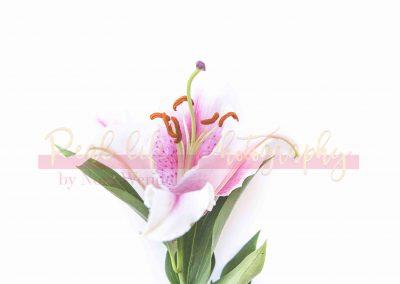 Creative Life - Minimal Flowers SAMPLE-10