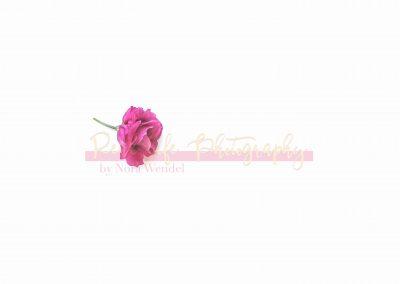 Creative Life - Minimal Flowers SAMPLE-6