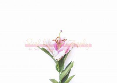 Creative Life - Minimal Flowers SAMPLE-9