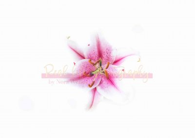 Creative Life - Pink Lily SAMPLE-1