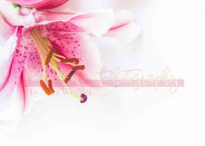 Creative Life - Pink Lily SAMPLE-10