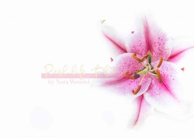 Creative Life - Pink Lily SAMPLE-2