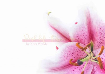 Creative Life - Pink Lily SAMPLE-3