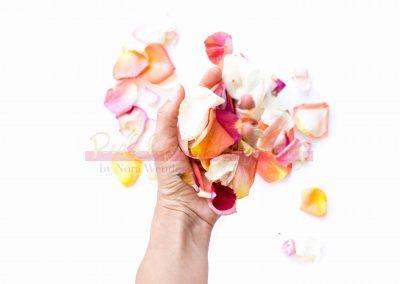 Creative Life - Roses SAMPLE-1