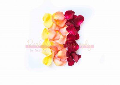 Creative Life - Roses SAMPLE-10