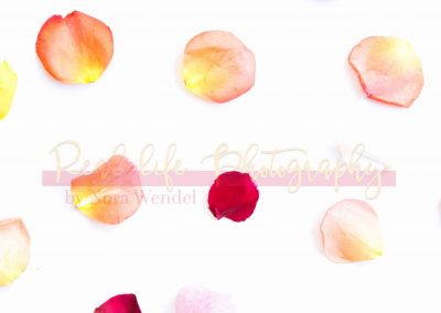 Creative Life - Roses SAMPLE-7
