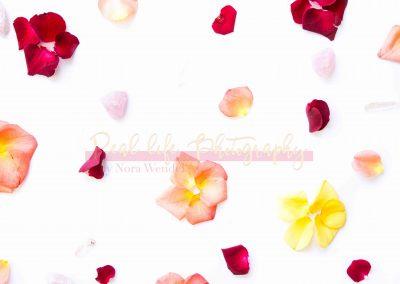 Creative Life - Roses SAMPLE-8