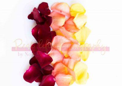 Creative Life - Roses SAMPLE-9