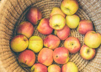 Market Stall Fruit SAMPLES-3